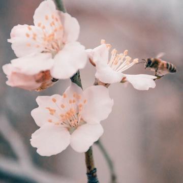 miel de rhododendron des Pyrénées 350g pot verre