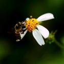 miel de néflier catalan 350g