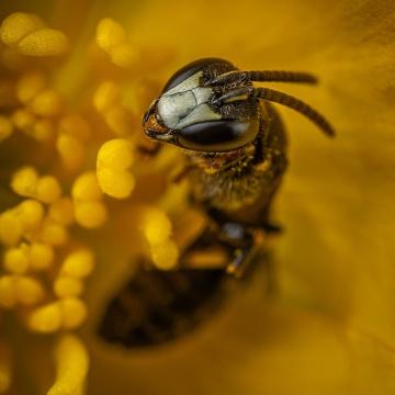 miel de néflier catalan 750g