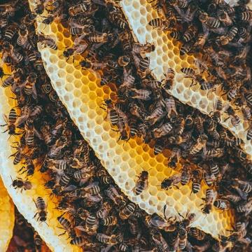 Miel de France  Miel Rayon d'Or