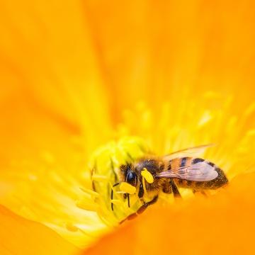 Miel d'Oranger • Miel Rayon d'Or